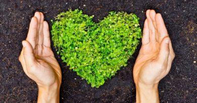 10 puntos a considerar para emprender un negocio sustentable